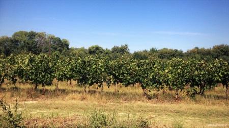 Wein der Provence